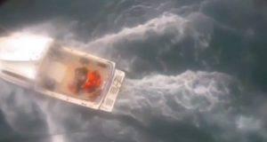 California squalo surfista