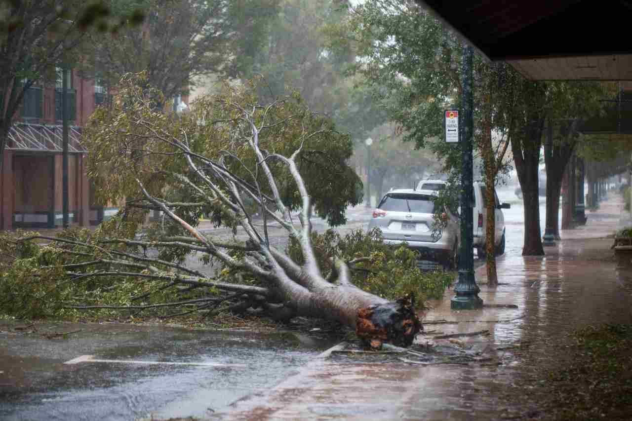 Uomo schiacciato albero