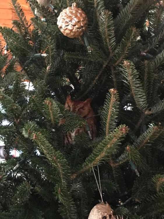 Un gufo nell'albero di Natale