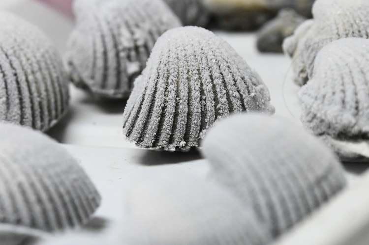 Le cozze resistono al cambiamento del clima