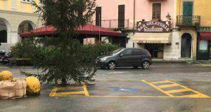 Sarzana albero parcheggio disabili