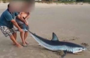 uccidono squalo spiaggia