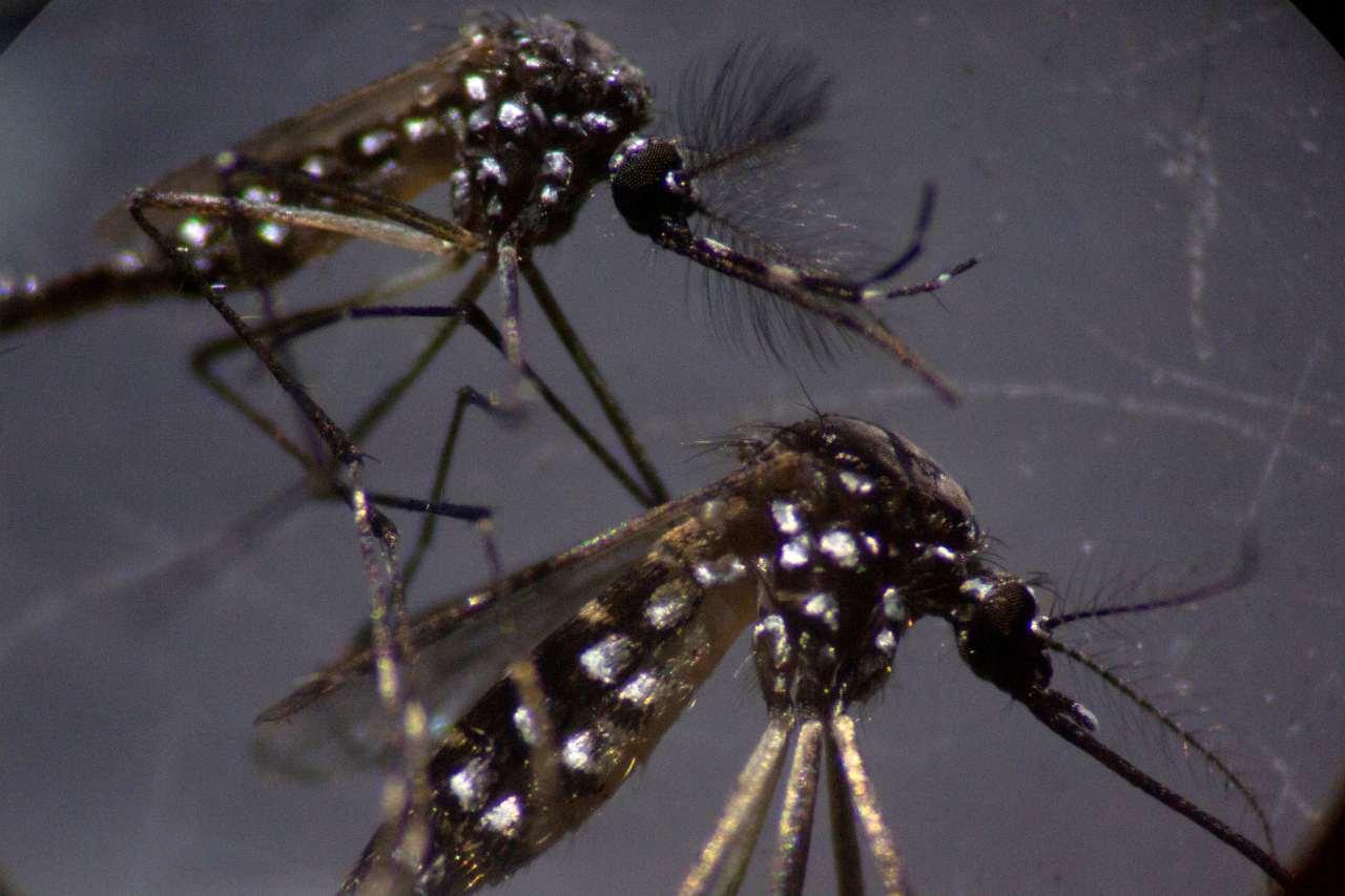 Coronavirus zanzara