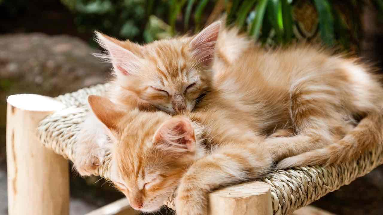 covid-19 gatti