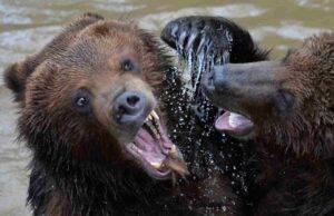 trento orso abattuto