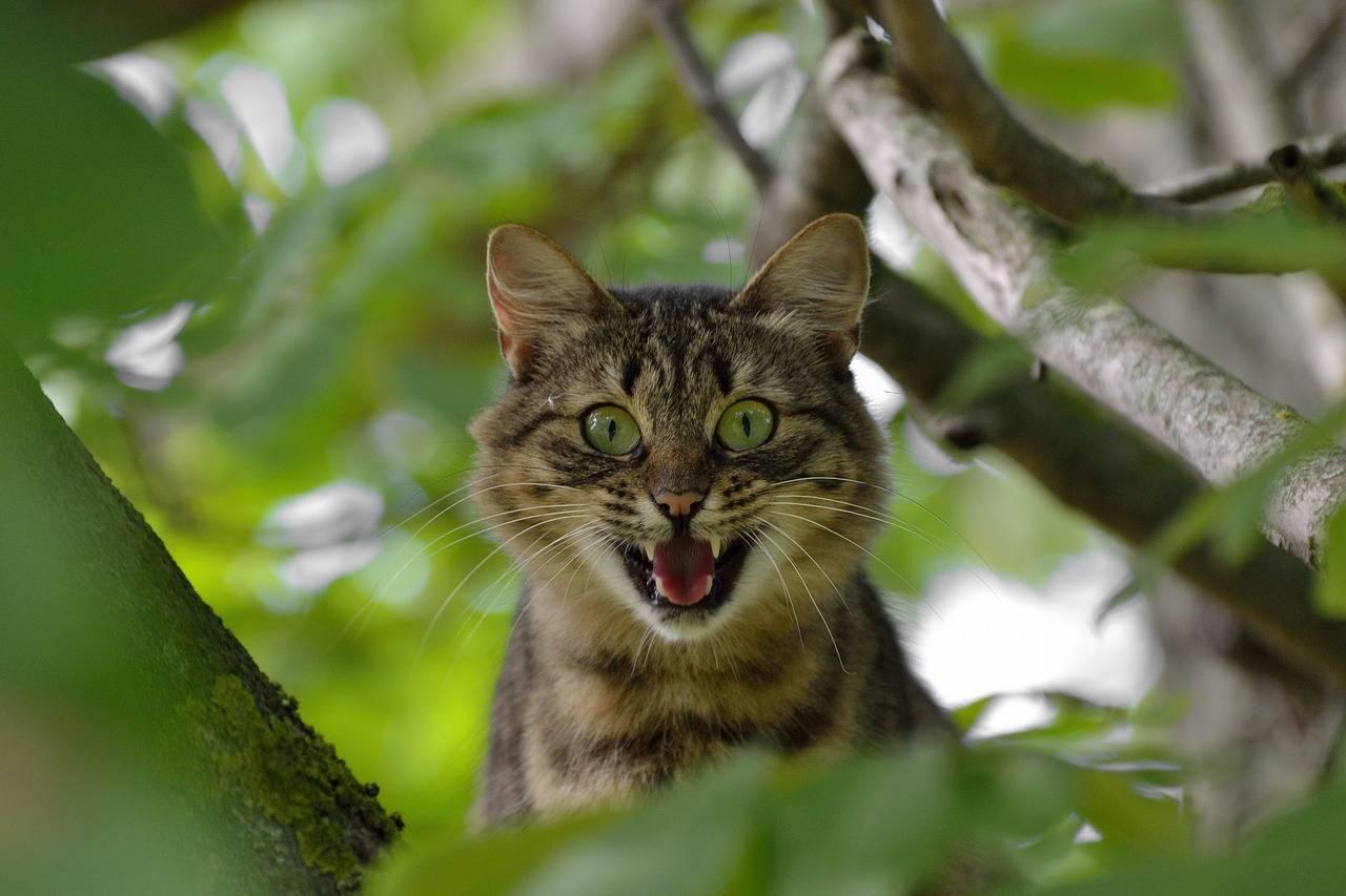 gatto agli arresti domiciliari