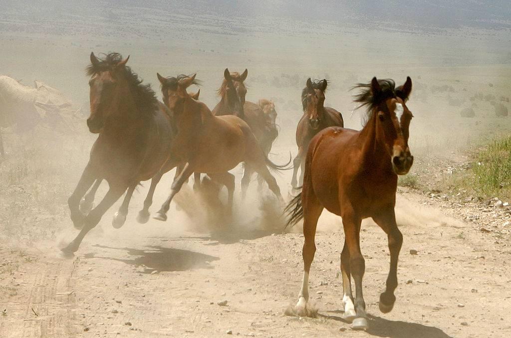 Cavalli divieto di macellazione