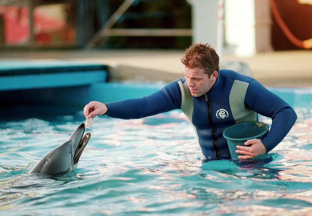 Delfino in un acquario