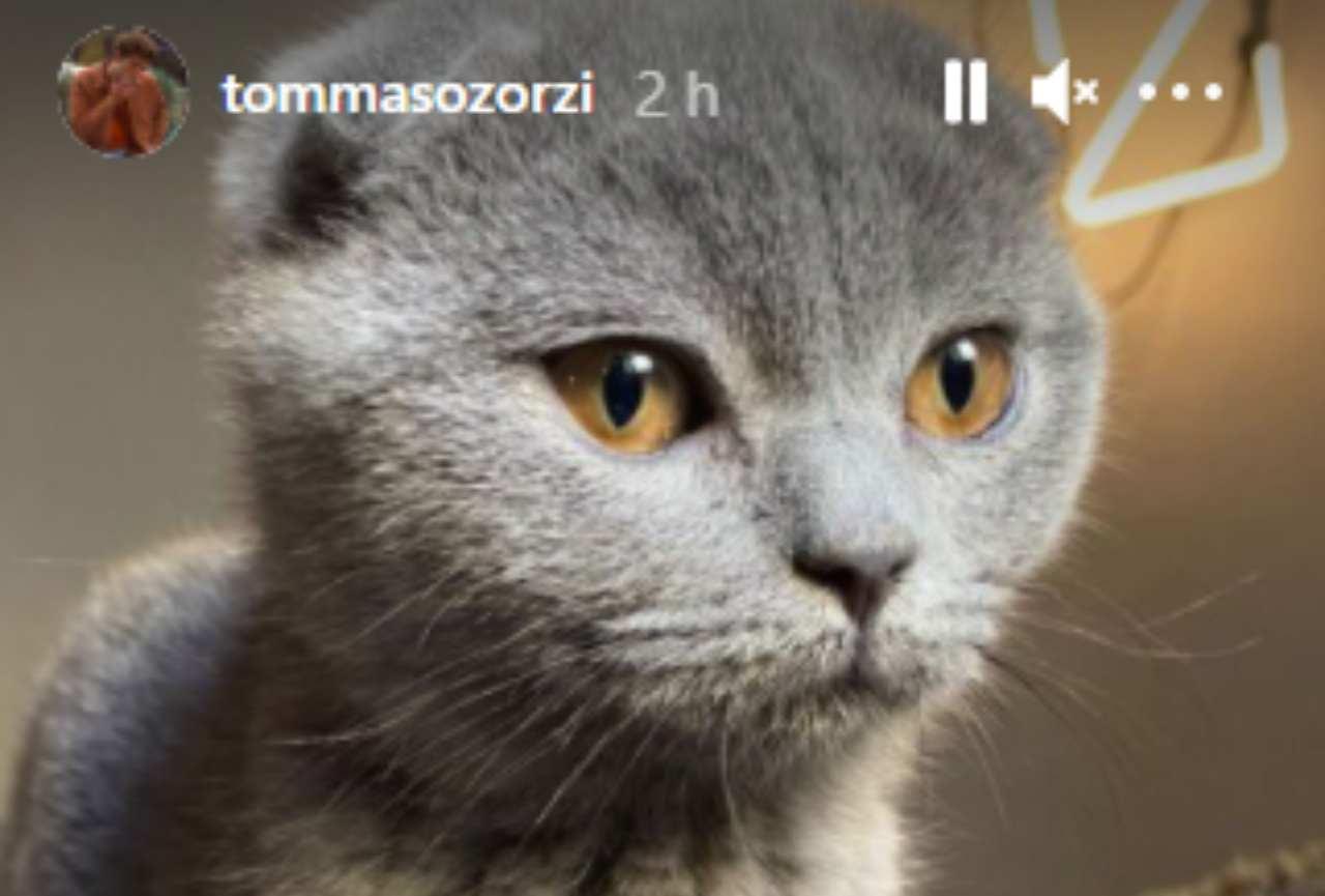 Tommaso Zorzi, un nuovo amico a quattro zampe