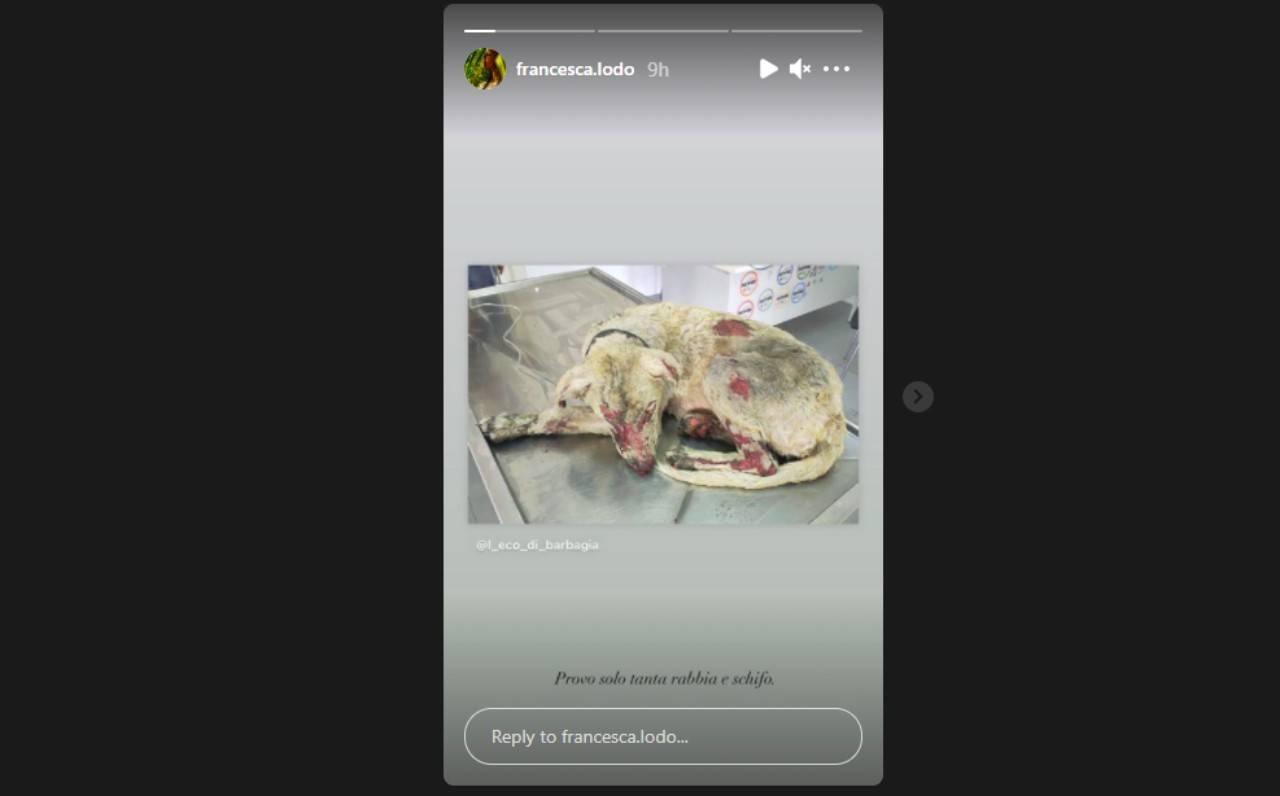 La showgirl Francesca Lodo commenta i roghi nei dintorni di Oristano, in Sardegna, e le conseguenze sulla natura circostante (foto Instagram).