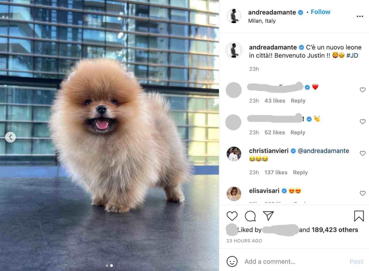 Uomini e Donne, l'ex tronista Andrea Damante mostra il nuovo cane adottato con Elisa Visari: si chiama Justin (fonte: Instagram).