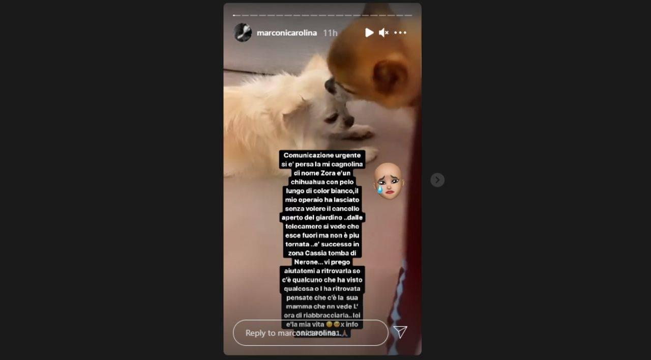 L'appello di Carolina Marconi su Instagram per il cane Zora, scomparso il 4 agosto