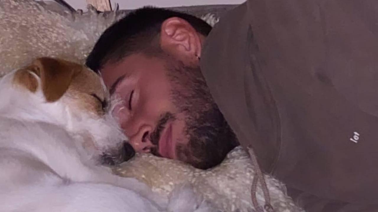 La foto scattata da Cecilia Rodriguez: Ignazio Moser dorme con i loro cani (foto Instagram).